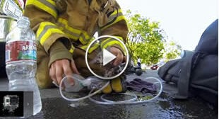 Fireman rescues an unconscious kitten, It Will Bring Tears To Your Eyes