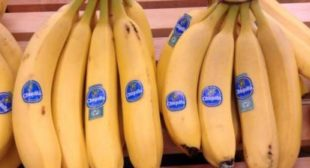 Families of Death Squad Victims Allowed to Sue Chiquita Executives