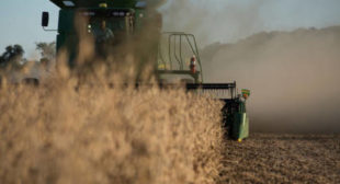 Trade War Cut US Soybean Exports to China 90% – Top USDA Economist