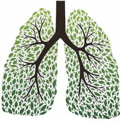 The 9 Best Herbs for Lung Cleansing and Respiratory Support – Global Healing Center