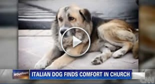 A German Shepherd Frequents Church After Loss Of Owner