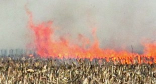 Hungary Destroys All Monsanto GMO Corn Fields