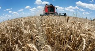 Monsanto in Ukraine: IMF loan for Ukraine may give GMO giant a backdoor into EU