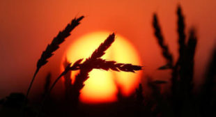 American wheat can no longer compete with new agricultural superpower Russia