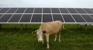 Russia starts exports of locally-produced solar panels to Europe